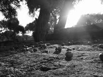 Puesta del sol en monocromo Foto de archivo libre de regalías