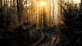 Puesta del sol en naturaleza Foto de archivo libre de regalías