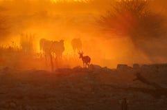 Puesta del sol en Okaukeujo, Namibia Foto de archivo