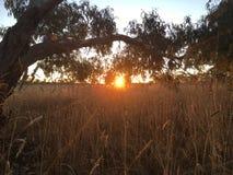 Puesta del sol en paisaje australiano del arbusto Imagen de archivo