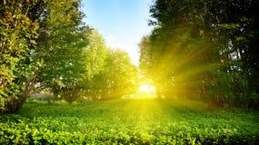 Puesta del sol en parque Fotografía de archivo libre de regalías