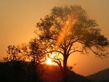 Puesta del sol en parque del kruger imagen de archivo