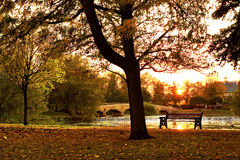 Puesta del sol en parque del otoño Fotos de archivo