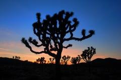 Puesta del sol en parque nacional del árbol de Joshua Imágenes de archivo libres de regalías