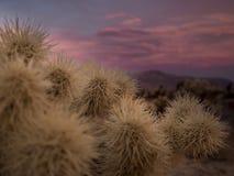 Puesta del sol en parque nacional del árbol de Joshua Fotos de archivo