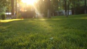 Puesta del sol en parque natural Foto de archivo