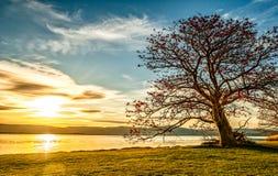 Puesta del sol en árbol Foto de archivo libre de regalías