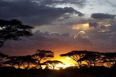 Puesta del sol en sabana africana Imagen de archivo