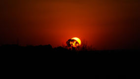 Puesta del sol en sabana cerca de Botshabelo, Mpumalanga, Suráfrica Imágenes de archivo libres de regalías