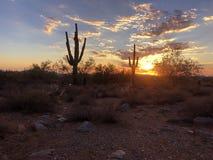 Puesta del sol en Scottsdale, Arizona, árbol del cactus del Saguaro silueteado fotografía de archivo