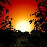 Puesta del sol en selva Fotografía de archivo