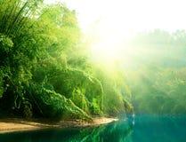 Puesta del sol en selva Foto de archivo libre de regalías