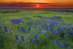 Puesta del sol en Sugar Ridge Road, Ennis, TX Imagen de archivo libre de regalías