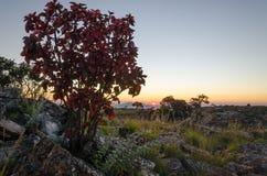 Puesta del sol en Tundavala en meseta angolana con la luz suave y el arbusto rojo Fotografía de archivo libre de regalías