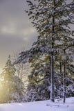 Puesta del sol en un bosque Fotos de archivo libres de regalías