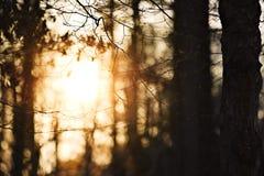 Puesta del sol en un bosque Foto de archivo libre de regalías