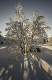Puesta del sol en un bosque Fotos de archivo