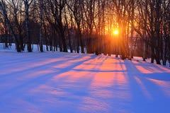 Puesta del sol en un bosque del invierno Fotos de archivo libres de regalías