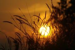 Puesta del sol en un campo del trigo o de la paja fotos de archivo
