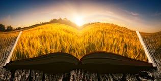Puesta del sol en un campo en las páginas de un libro abierto Imagenes de archivo