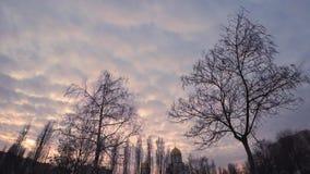 Puesta del sol en un cielo nublado sobre la ciudad de igualación a través de las ramas de los árboles desnudos del otoño con una  almacen de metraje de vídeo
