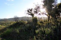 Puesta del sol en un prado fotografía de archivo libre de regalías