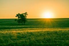 Puesta del sol en un prado verde con un árbol fotos de archivo