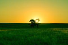 Puesta del sol en un prado verde con un árbol foto de archivo