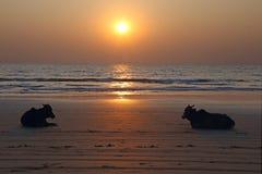 Puesta del sol en una playa india Imágenes de archivo libres de regalías