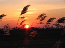 Puesta del sol en una pradera Foto de archivo