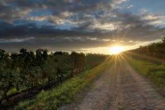 Puesta del sol en viñedos Foto de archivo libre de regalías