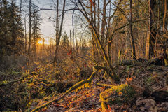 Puesta del sol en Wallace Falls State Park Fotografía de archivo