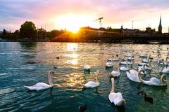 Puesta del sol en Zurich imagen de archivo libre de regalías