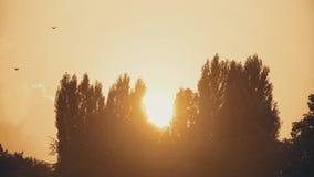 Puesta del sol entre los árboles en la ciudad metrajes