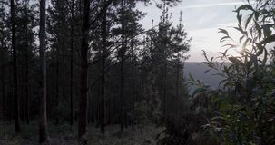 Puesta del sol entre los pinos con un cielo claro almacen de metraje de vídeo
