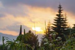 Puesta del sol fantástica en montañas de la montaña Flores salvajes contra colorido Fotos de archivo