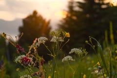Puesta del sol fantástica en pueblo de montaña Fondo colorido tranquilo Fotografía de archivo