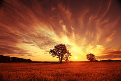 Puesta del sol fantástica del paisaje en el campo de trigo Fotografía de archivo libre de regalías