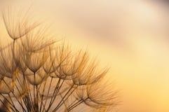 Puesta del sol frágil Foto de archivo libre de regalías
