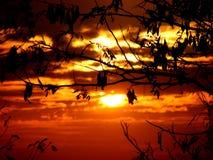 Puesta del sol frondosa Fotos de archivo