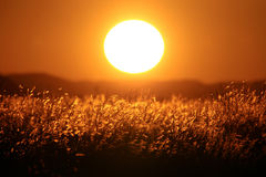Puesta del sol grande en sabana africana Foto de archivo