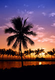 Puesta del sol hawaiana de la palmera Imagen de archivo