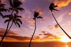 Puesta del sol hawaiana tropical foto de archivo libre de regalías