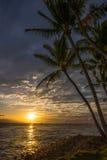 Puesta del sol hawaiana y palmeras Fotografía de archivo