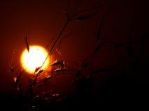 Puesta del sol herbosa imagen de archivo libre de regalías