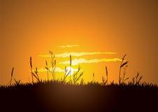 Puesta del sol herbosa Foto de archivo libre de regalías