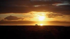 Puesta del sol hermosa con la silueta del caballo almacen de video