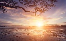 Puesta del sol hermosa con la silueta de la rama de árbol imagenes de archivo
