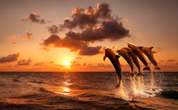 Puesta del sol hermosa con los delfínes Imagenes de archivo
