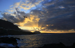 Puesta del sol hermosa con una gaviota que se eleva en el cielo sobre el Océano Atlántico en la ciudad de Garachico, Tenerife foto de archivo libre de regalías